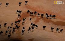 camel sm.jpg
