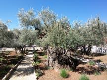 GethsemaneSm.jpg