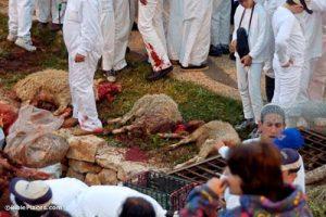 Samaritan-Passover,-slain-lamb,-tb041106729-bibleplaces